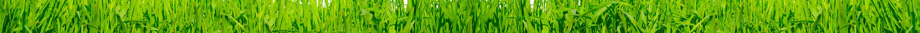 footer_grass_low